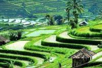 Ubud Bali Masuk 10 Kota Wisata Terbaik 2020