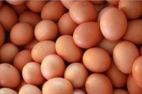 Kementan Dorong Peningkatan Konsumsi Protein Hewani untuk Cegah Stunting