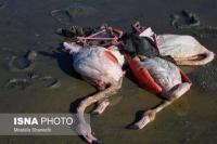 Ribuan Burung Mati Keracunan di Cagar Alam Iran