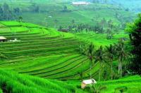 Ditugasi Garap Food Estate, PUPR Anggarkan Rp8,68 Triliun