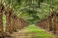 Pemerintah sesuaikan tarif pungutan ekspor industri kelapa sawit berkelanjutan