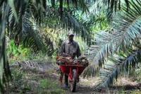 Minyak Kelapa Sawit Jadi Fokus Perjanjian Perdagangan Swiss-Indonesia