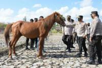 Kapolda NTT Bentuk Pasukan Satwa Berkuda Demi Melayani Masyarakat