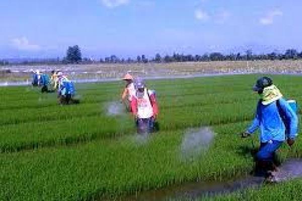 Indonesia dan FAO Kerja Sama Perkuat Sistem Pangan Berkelanjutan